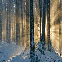Солнце в январе. :: Наталья