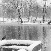 На Белом озере. :: Elena Ророva