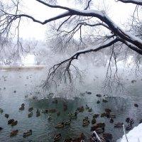 В морозной дымке :: Татьяна
