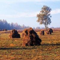 Льняное поле :: Сергей Курников