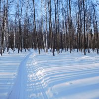 Зимний лес :: Оливер Куин