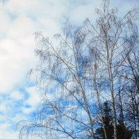 Зимний пейзаж :: Оливер Куин