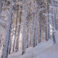 Заметает зима заметает... :: Наталья Димова