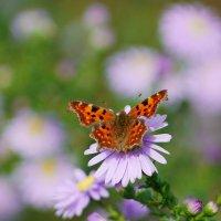 октябрьские бабочки  10 :: Александр Прокудин