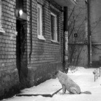 Одинокий. :: сергей лебедев