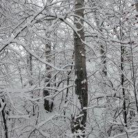 Зимнее утро... Тишина, спокойствие... :: Галина