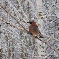 Птичка на ветке :: Оливер Куин