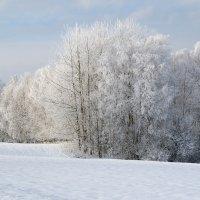 Зимние картинки :: Людмила Торварт