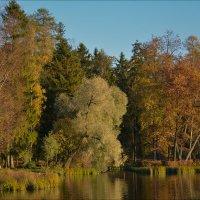 В парке... :: Андрей Медведев