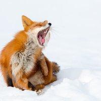 Спать охота!!! :: Денис Будьков