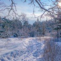 Зимний пейзаж ..... :: Александр Селезнев