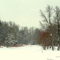 В пасмурный февральский день в парках ЦС - 2 :: Сергей