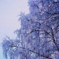 В морозный денёк :: sm-lydmila Смородинская