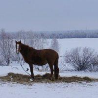 На фоне зимнего пейзажа. :: сергей