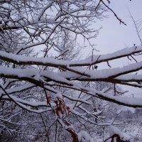 После ночного снегопада :: Антонина Гугаева