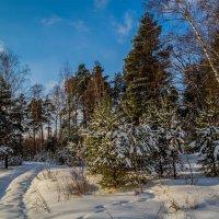 Солнце vs. Мороза # 2 :: Андрей Дворников