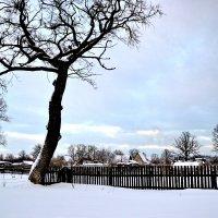 Зимняя красота :: Сергей F
