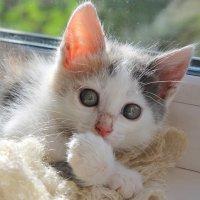 Котенок :: tamara kremleva