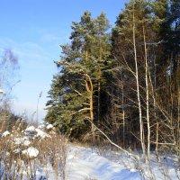 На окраине леса :: Нина Синица
