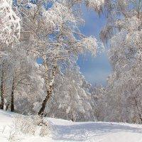 После снегопада :: владимир тимошенко