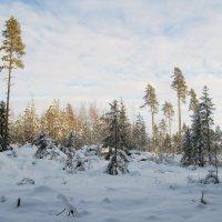 Зимний лес :: Ольга Попова (popova/j2011)
