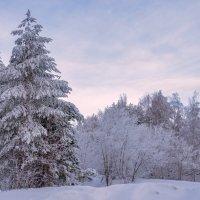 Морозный воздух безмятежно чист... :: Наталья Димова