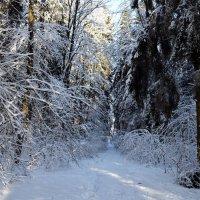 Зимой в лесу :: Galina M.