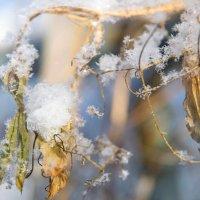 Зима в горошек. :: Ирэна Мазакина