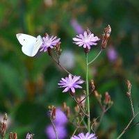 Бело-фиолетовый этюд :: Canon 77 Ефимов А.