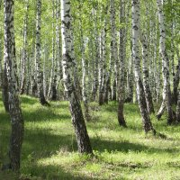 Июль в лесу :: Влад Платов
