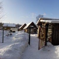 Зима на нашем подворье. :: Жанна Викторовна