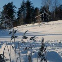 Зимний отдых :: Ирина Фирсова