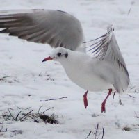 Приземление чайки :: Дмитрий
