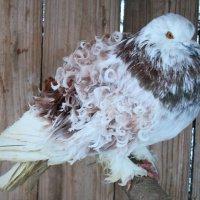 Птичка в клетке :: Дмитрий