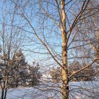 Солнечный февраль :: Марина Птичка