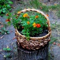 Корзина с цветами :: Самохвалова Зинаида