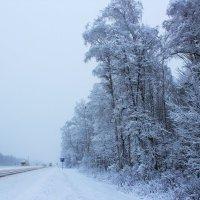 Кажется, зима накрыла целый мир :: Григорий охотник