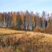 Осень :: Сергей Курников