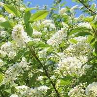 Душистая весна :: Влад Платов