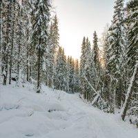 Морозная февральская тайга, -35 °C. Окрестности Ухты, Республика Коми. :: Николай Зиновьев