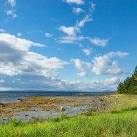 Залив Белого моря :: Юра Степнов