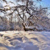 В зимней сказке :: Наталья Лакомова