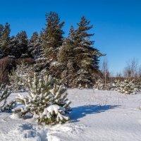 Снежный и морозный февраль # 3 :: Андрей Дворников