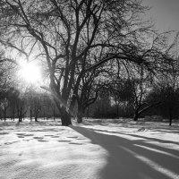 Солнце и сердце ... :: Лариса Корж