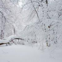 Очень снежно :: Наталья Лакомова