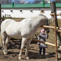 Кушай, лошадка! :: Влад Чуев