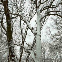 Зима. :: Николай Сидаш