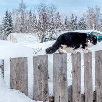 Мартовский кот :: Виктор Садырин
