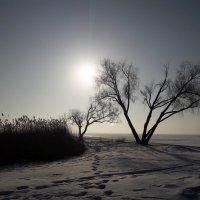Утро на заливе :: Красоты Балтики