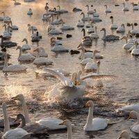 Утро на озере Светлом. :: Елена Савчук